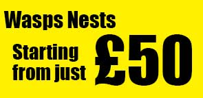 SPECIAL OFFER: Wasp Nests Removed from just £50