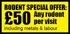 SPECIAL OFFER: All rodents are only £50 a visit